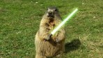 Woodchuck with Light Saber